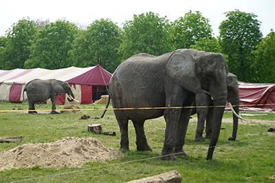 elefanten_berolina_dresden