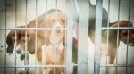 Beagle in der Außenanlagen des Tierversuchslabors LPT in Mienenbüttel bei Hamburg.