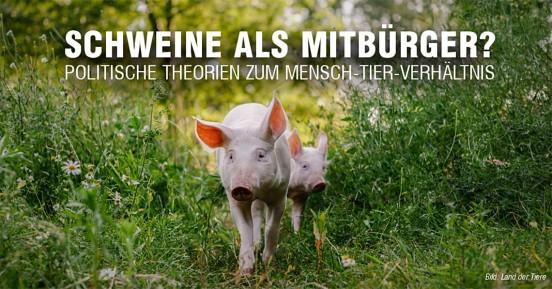 tagesseminar_schmitz_schweine
